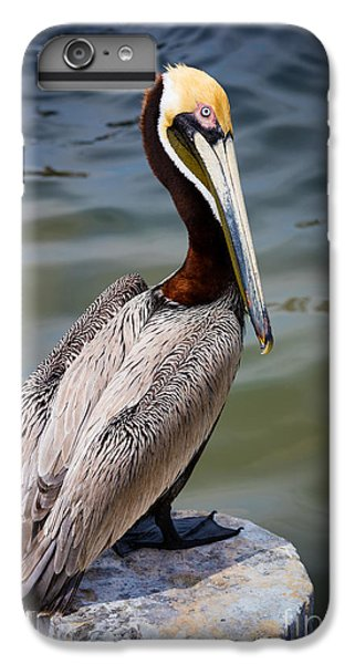 Grey Pelican IPhone 7 Plus Case by Inge Johnsson