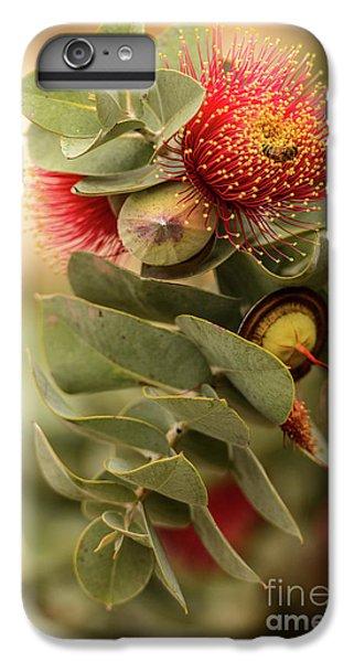 Gum Nuts IPhone 7 Plus Case by Werner Padarin