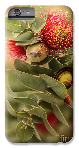 IPhone 7 Plus Case featuring the photograph Gum Nuts by Werner Padarin