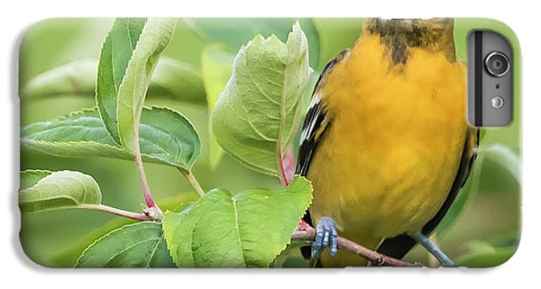Immature Baltimore Oriole  IPhone 7 Plus Case