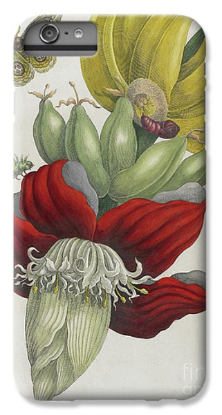 Inflorescence Of Banana, 1705 IPhone 7 Plus Case by Maria Sibylla Graff Merian