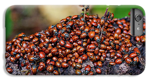 Ladybugs On Branch IPhone 7 Plus Case by Garry Gay