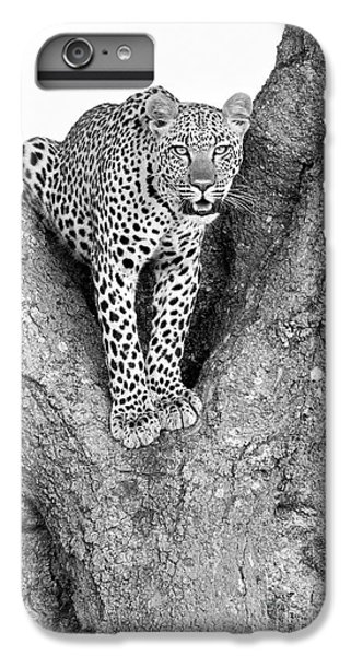 Leopard In A Tree IPhone 7 Plus Case by Richard Garvey-Williams
