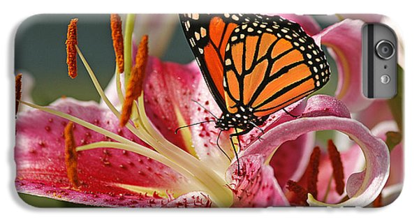 Lily iPhone 7 Plus Case - Monarch On A Stargazer Lily by Cindi Ressler