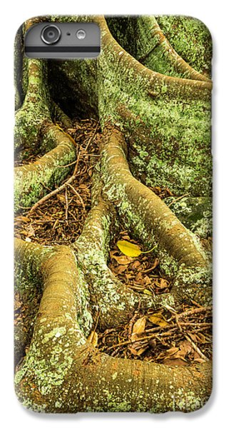 IPhone 7 Plus Case featuring the photograph Moreton Bay Fig by Werner Padarin