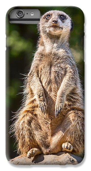 Morning Sun IPhone 7 Plus Case by Jamie Pham