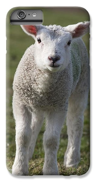 Sheep iPhone 7 Plus Case - Northumberland, England A White Lamb by John Short