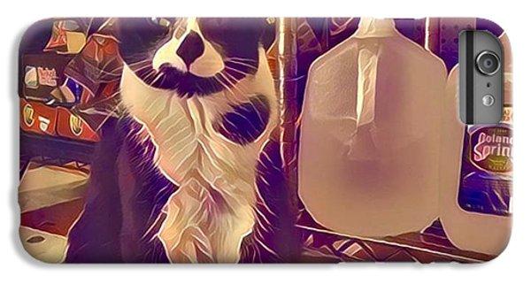 Nyc Bodega Cat IPhone 7 Plus Case