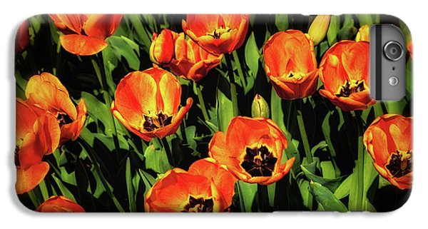 Tulip iPhone 7 Plus Case - Open Wide - Tulips On Display by Tom Mc Nemar