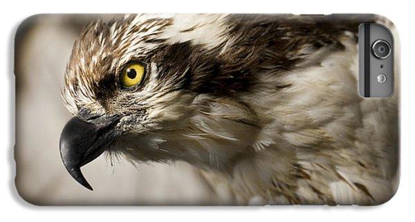 Osprey iPhone 7 Plus Case - Osprey by Adam Romanowicz