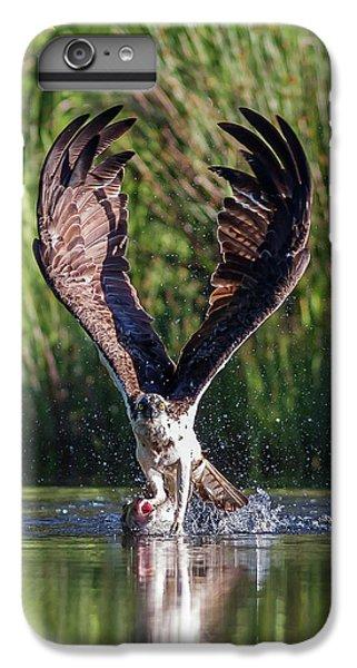 Osprey iPhone 7 Plus Case - Osprey - Strike by Pat Speirs