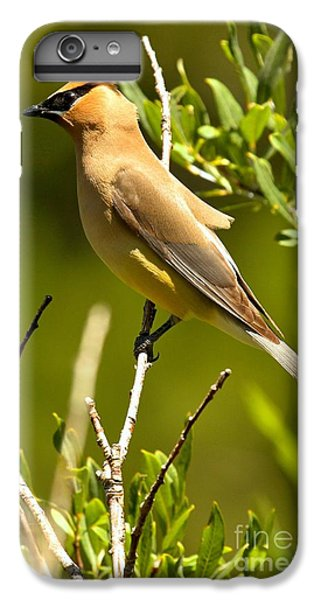 Cedar Waxing iPhone 7 Plus Case - Perfectly Perched by Adam Jewell