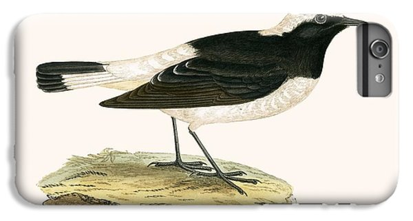 Pied Wheatear IPhone 7 Plus Case by English School