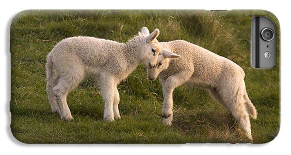 Sheep iPhone 7 Plus Case - Poke by Angel Ciesniarska