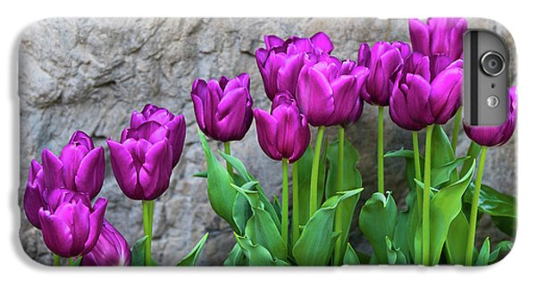 Tulip iPhone 7 Plus Case - Purple Tulips by Tom Mc Nemar