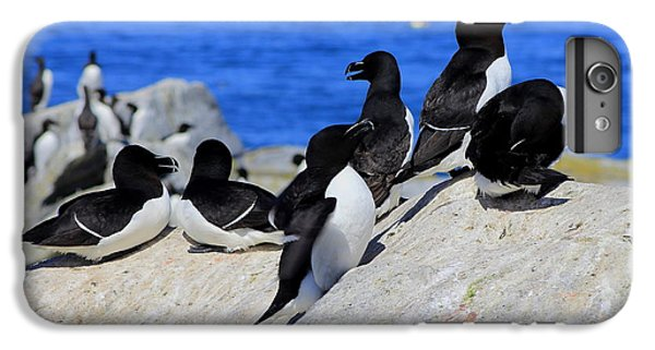 Razorbills IPhone 7 Plus Case by John Burk