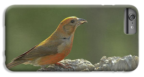 Red Crossbill IPhone 7 Plus Case by Constance Puttkemery
