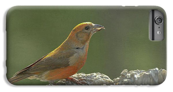 Crossbill iPhone 7 Plus Case - Red Crossbill by Constance Puttkemery