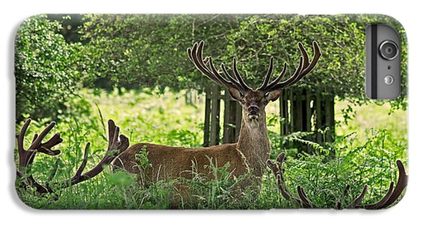 Red Deer Stag IPhone 7 Plus Case