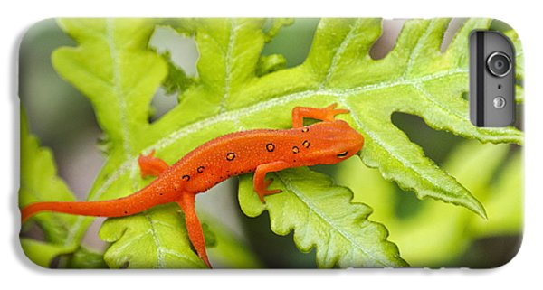 Newts iPhone 7 Plus Case - Red Eft Eastern Newt by Christina Rollo