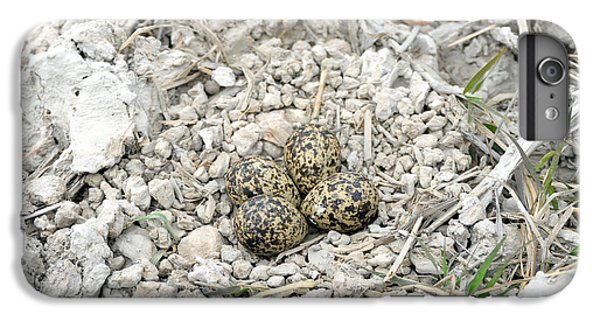 Red-wattled Lapwing Nest IPhone 7 Plus Case by Fletcher & Baylis