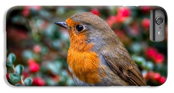 Robin Redbreast IPhone 7 Plus Case