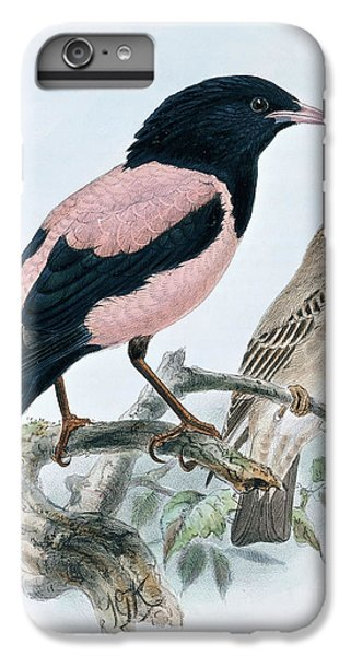 Starlings iPhone 7 Plus Case - Rose Colored Starling by Johan Gerard Keulemans