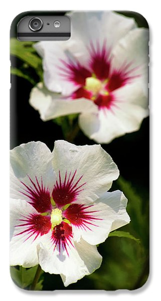 IPhone 7 Plus Case featuring the photograph Rose Of Sharon by Christina Rollo