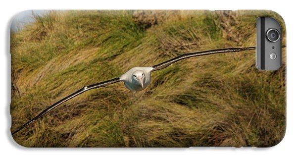 Royal Albatross 2 IPhone 7 Plus Case by Werner Padarin