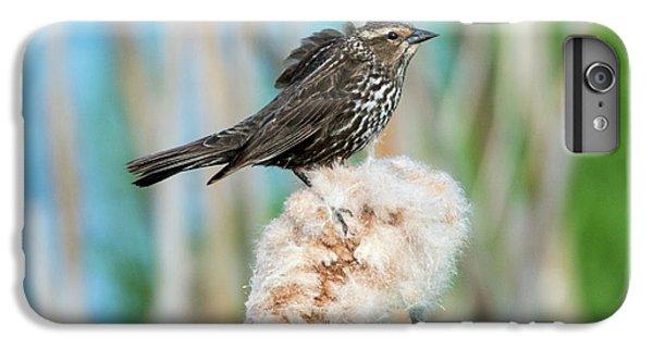 Ruffled Feathers IPhone 7 Plus Case