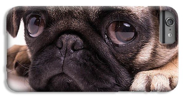 Pug iPhone 7 Plus Case - Sad Sack - Pug Puppy by Edward Fielding