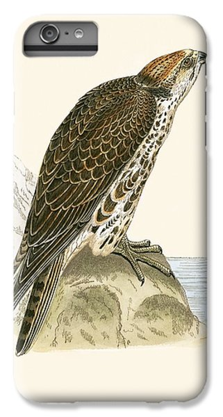 Saker Falcon IPhone 7 Plus Case by English School
