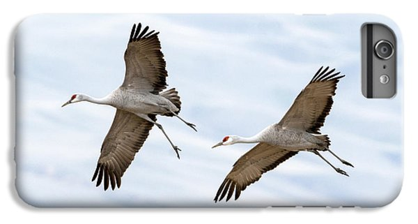 Sandhill Crane Approach IPhone 7 Plus Case