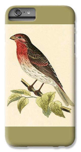 Scarlet Bullfinch IPhone 7 Plus Case