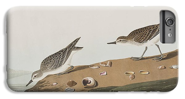 Sandpiper iPhone 7 Plus Case - Semipalmated Sandpiper by John James Audubon
