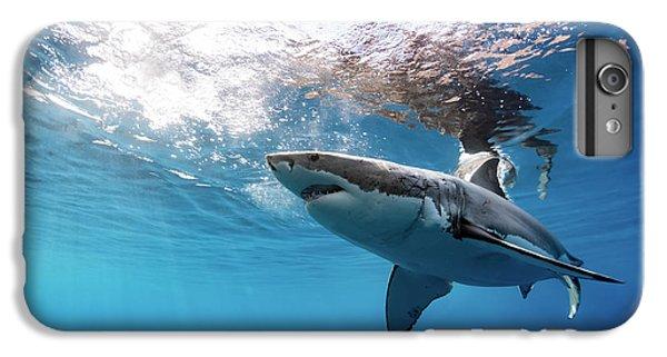 Shark Rays IPhone 7 Plus Case by Shane Linke