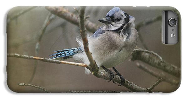 Bluejay iPhone 7 Plus Case - Shelter From The Wind by Susan Capuano