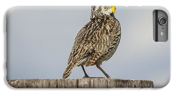 Singing A Song IPhone 7 Plus Case by Thomas Young