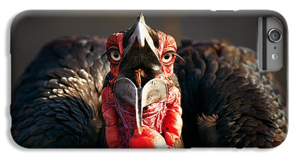 Southern Ground Hornbill Swallowing A Seed IPhone 7 Plus Case by Johan Swanepoel