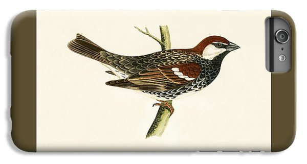 Spanish Sparrow IPhone 7 Plus Case by English School