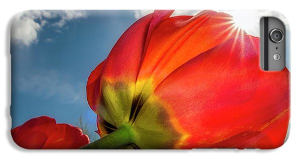 IPhone 7 Plus Case featuring the photograph Sunbeams And Tulips by Adam Romanowicz
