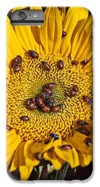 Ladybug iPhone 7 Plus Case - Sunflower Covered In Ladybugs by Garry Gay