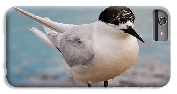 IPhone 7 Plus Case featuring the photograph Tern 1 by Werner Padarin