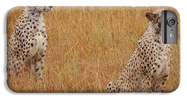 The Cheetahs IPhone 7 Plus Case by Nichola Denny