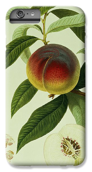The Galande Peach IPhone 7 Plus Case by William Hooker