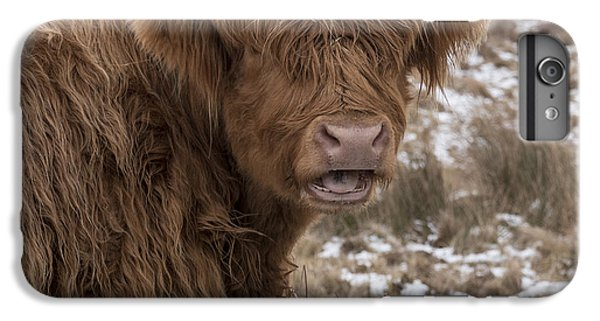 The Laughing Cow, Scottish Version IPhone 7 Plus Case by Jeremy Lavender Photography