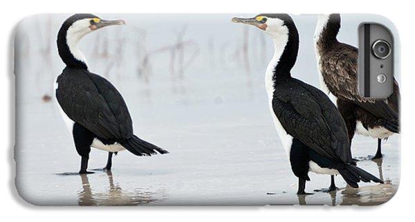 Three Cormorants IPhone 7 Plus Case by Werner Padarin