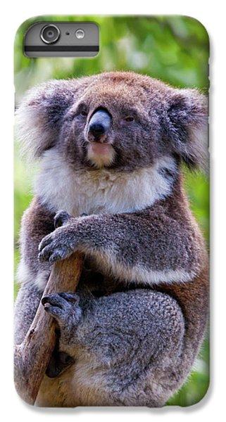 Treetop Koala IPhone 7 Plus Case