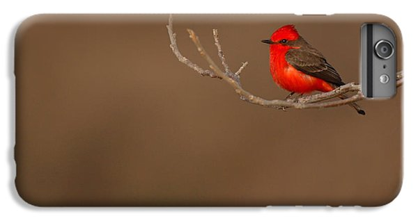 Flycatcher iPhone 7 Plus Case - Vermillion Flycatcher On Early Spring Perch by Max Allen