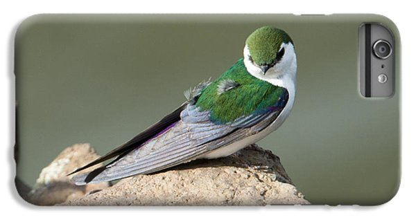 Swallow iPhone 7 Plus Case - Violet-green Swallow by Mike Dawson